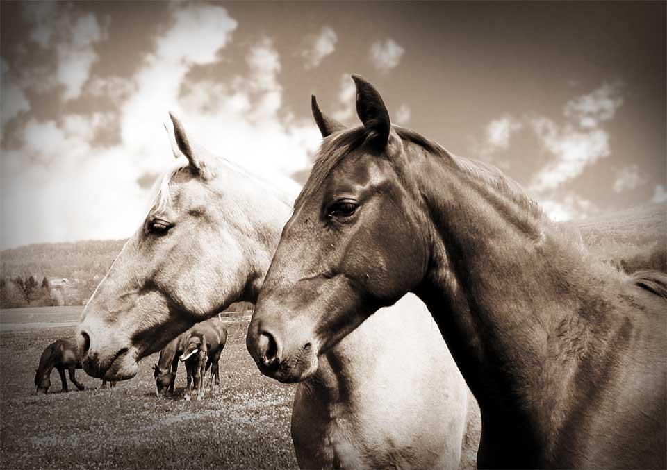 henry ford snabbare häst
