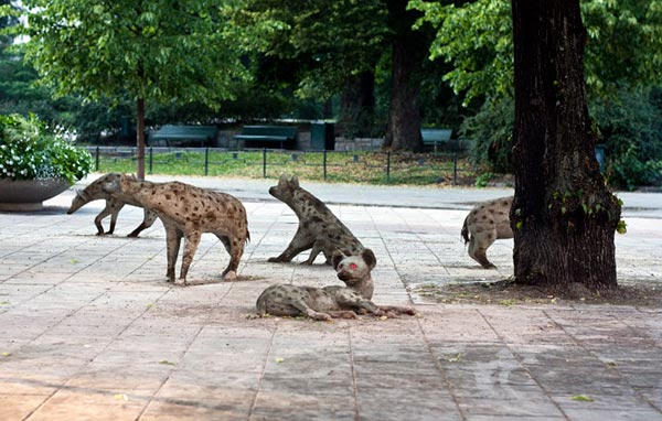 hyenorna-vid-stureplan